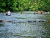 toccoa-river-swimmers